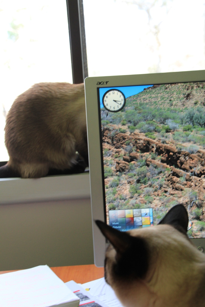 Cats sitting in front of computer screen