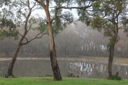 Fog softens the colours of the landscape