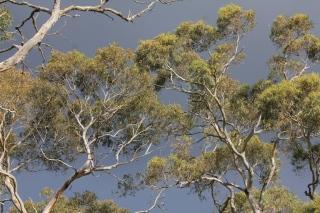 Sunlit branches against a dark thundercloud