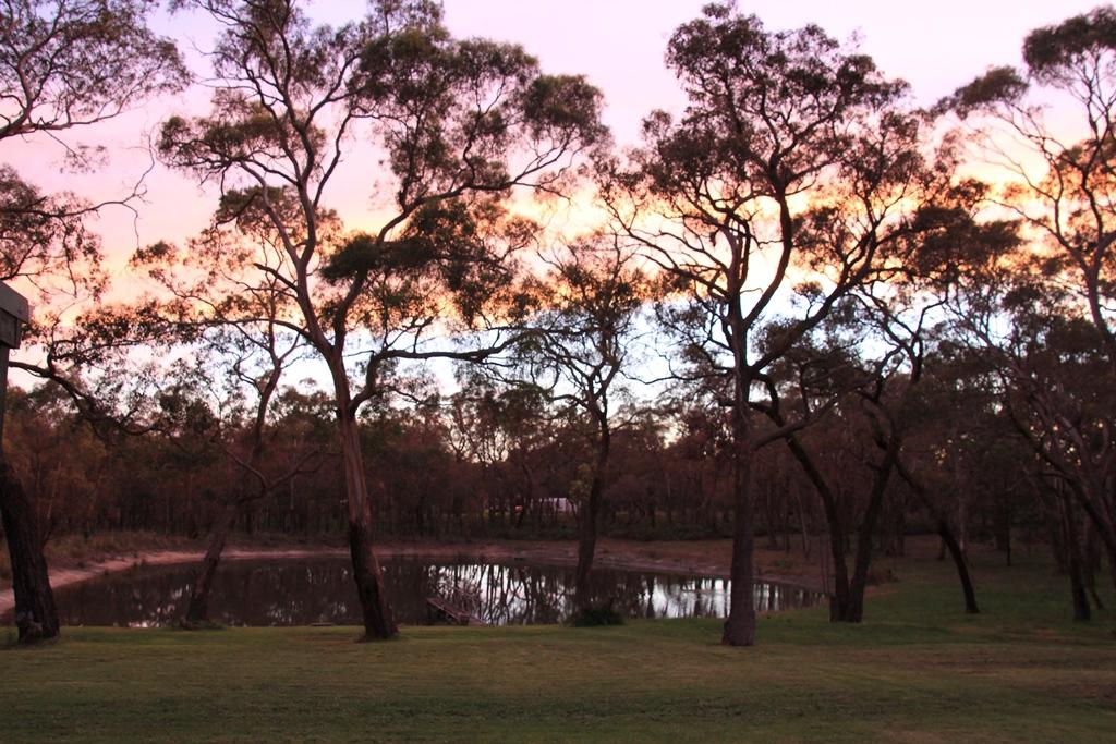 Sunset through thetrees
