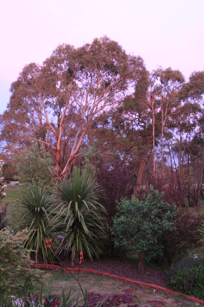 The garden bathed in pink light