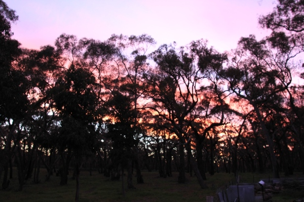 Trees silhouetted against a vivid sky