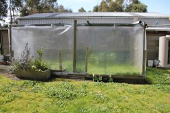 The Existing Vegetable Garden