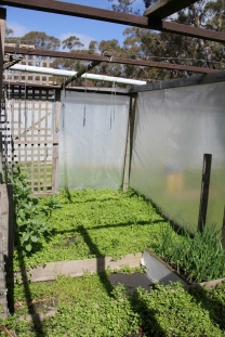 Vegie Garden - Before