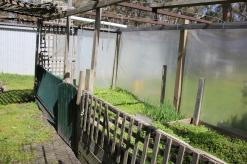 Vegie Garden Possum Proofing