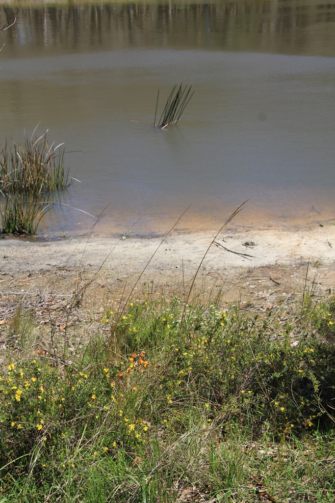 Wild Flowers on the Dam Bank