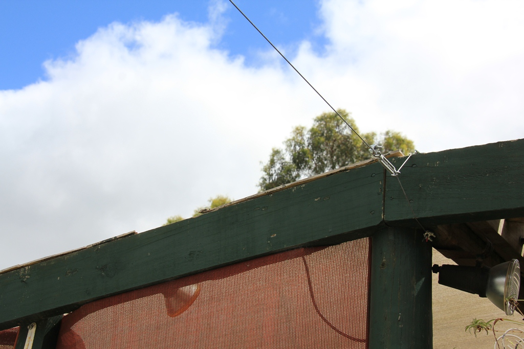 Support wire attached to the fernery