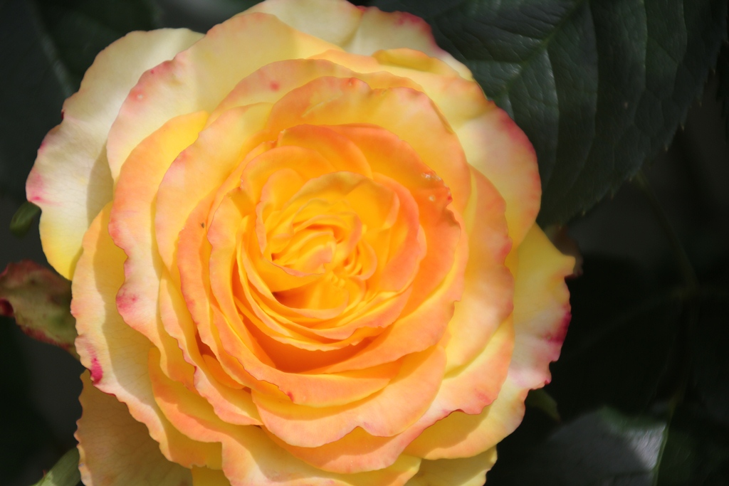 Our Garden Blooms