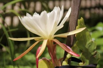 White Flower 4