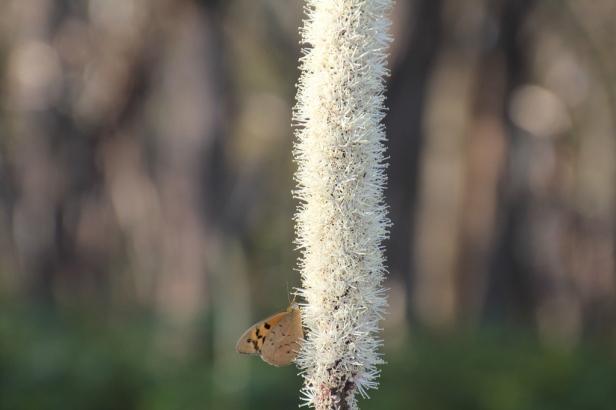 Butterfly feeding.
