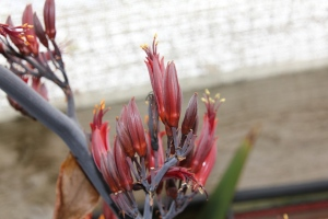 Nectar-rich flowers