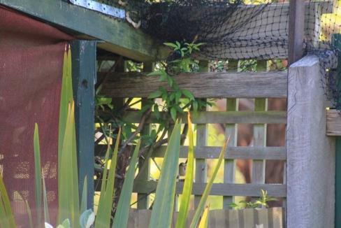 Wren sitting on lattice fence