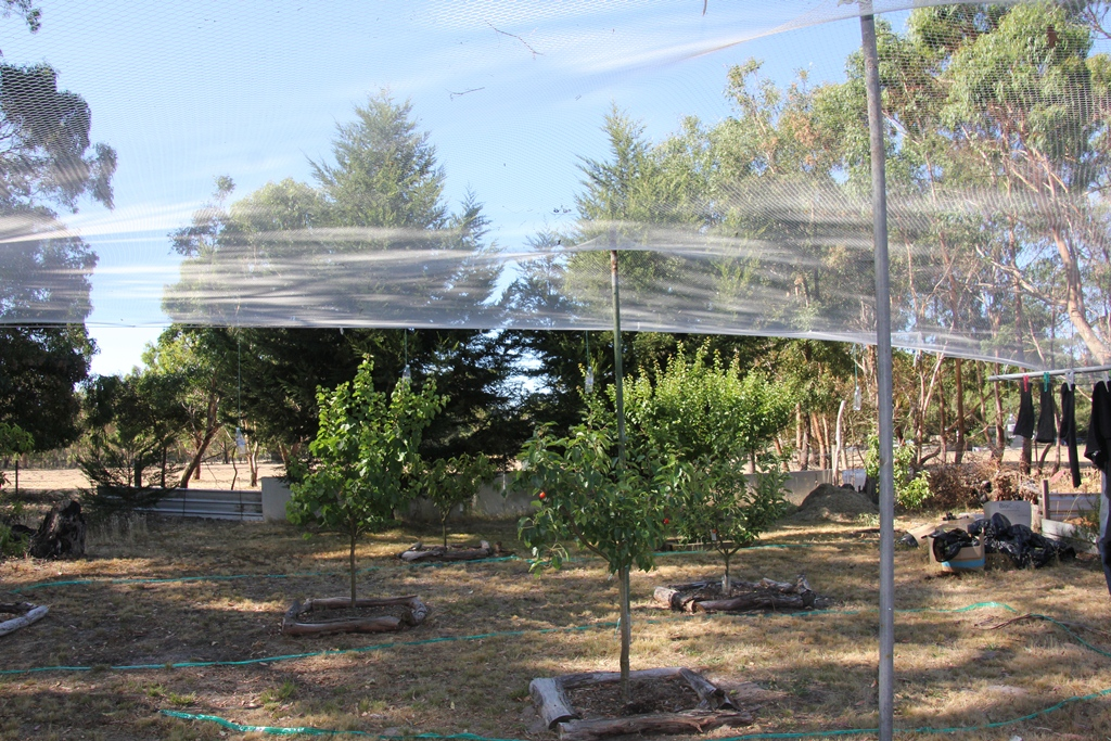 Bird netting over the orchard.