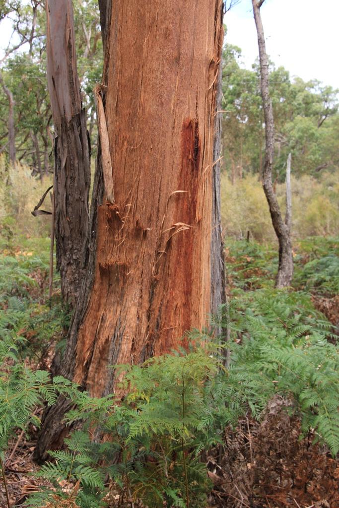 Tree trunk exposed