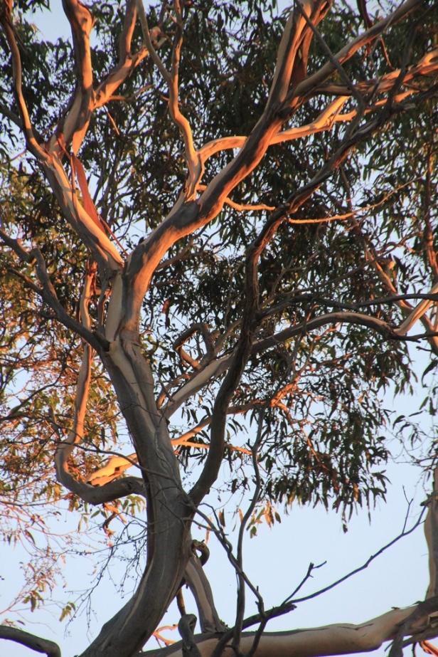 Tree lit at sunset