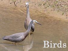 Birds_Thumb