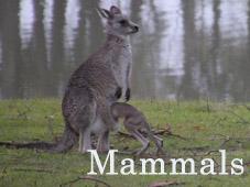 Mammals_Thumb