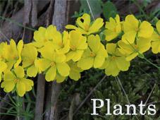 Plants_Thumb
