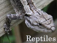 Reptiles_Thumb