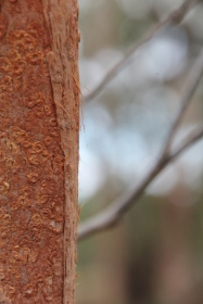 Trunk with insect marks