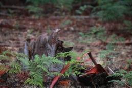 Wet bark Against Burned Stump