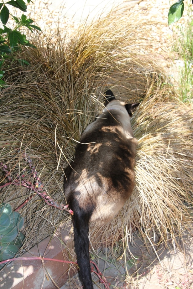 Luna and Native Grass