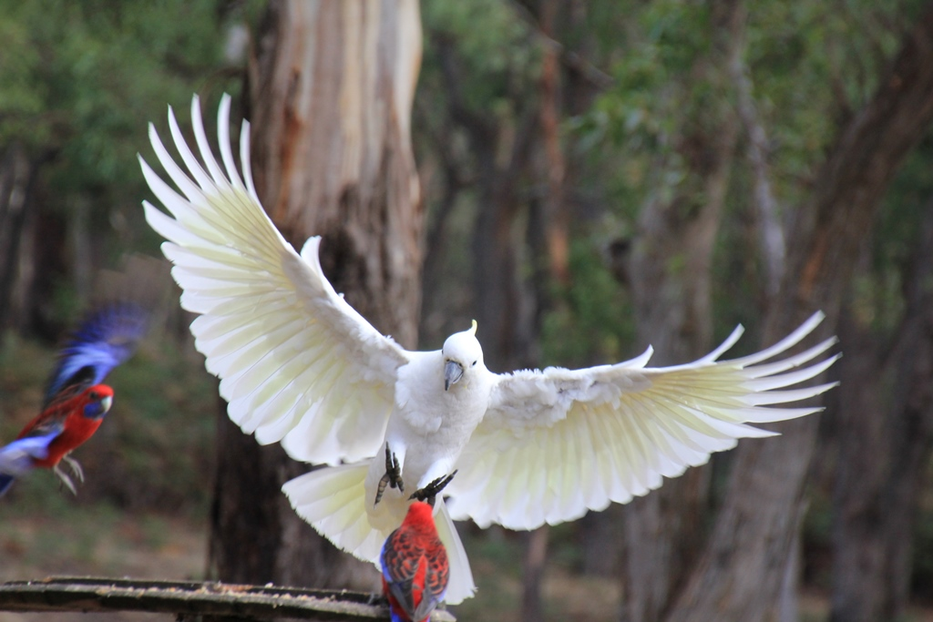 Playing around with Cockatoos