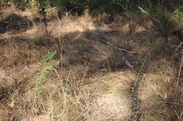 Kangaroo camping ground