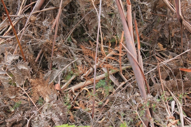Native plant regrowth