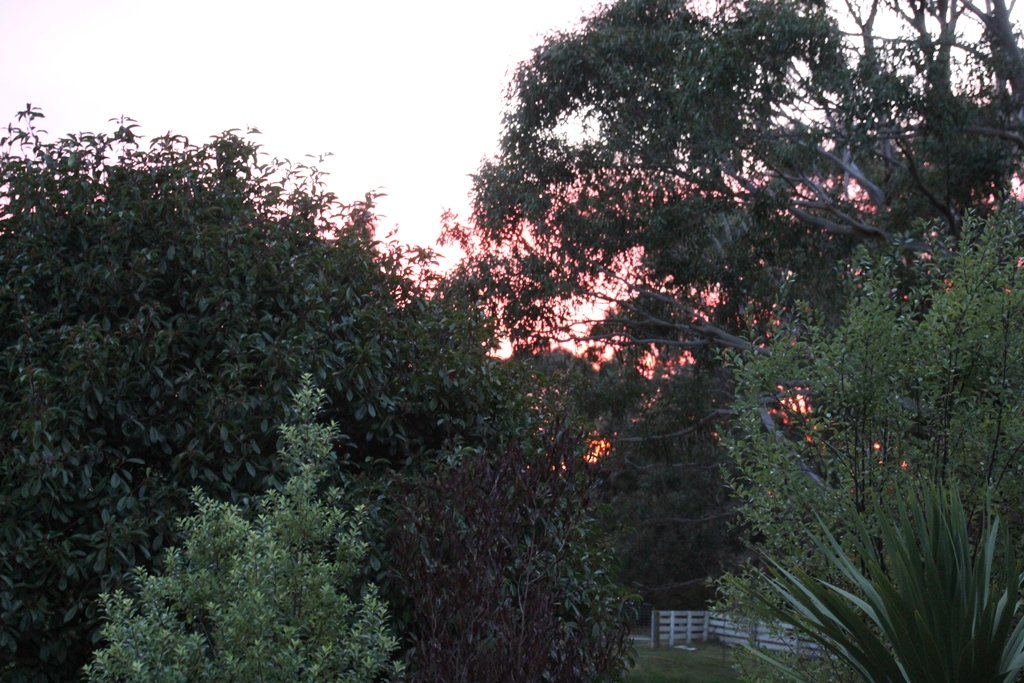Red Sunrise 1