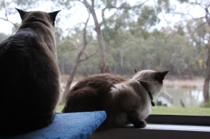 Cats looking out