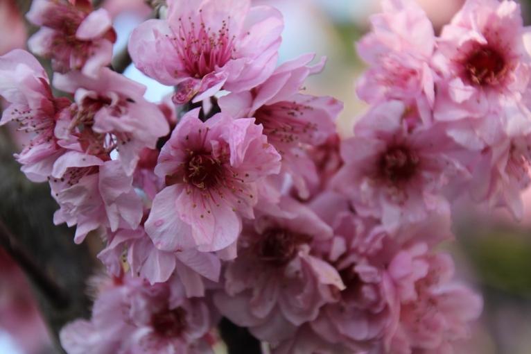 Perfumed Blossom