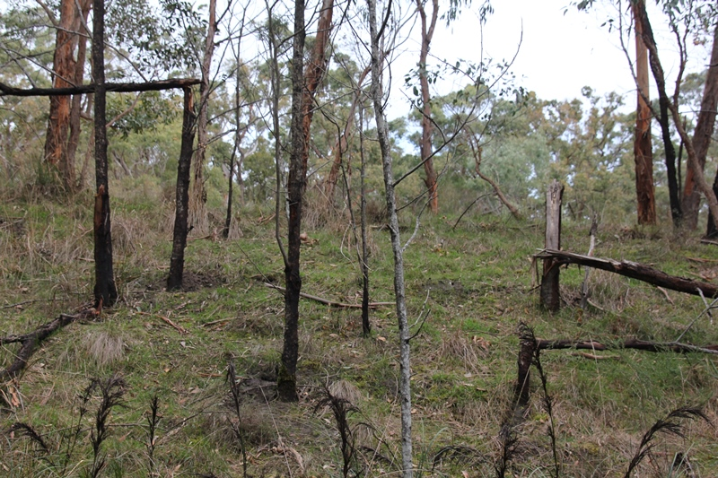 Broken Trees 2