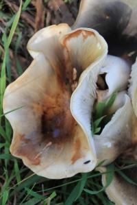 Frilly Fungi Close-up