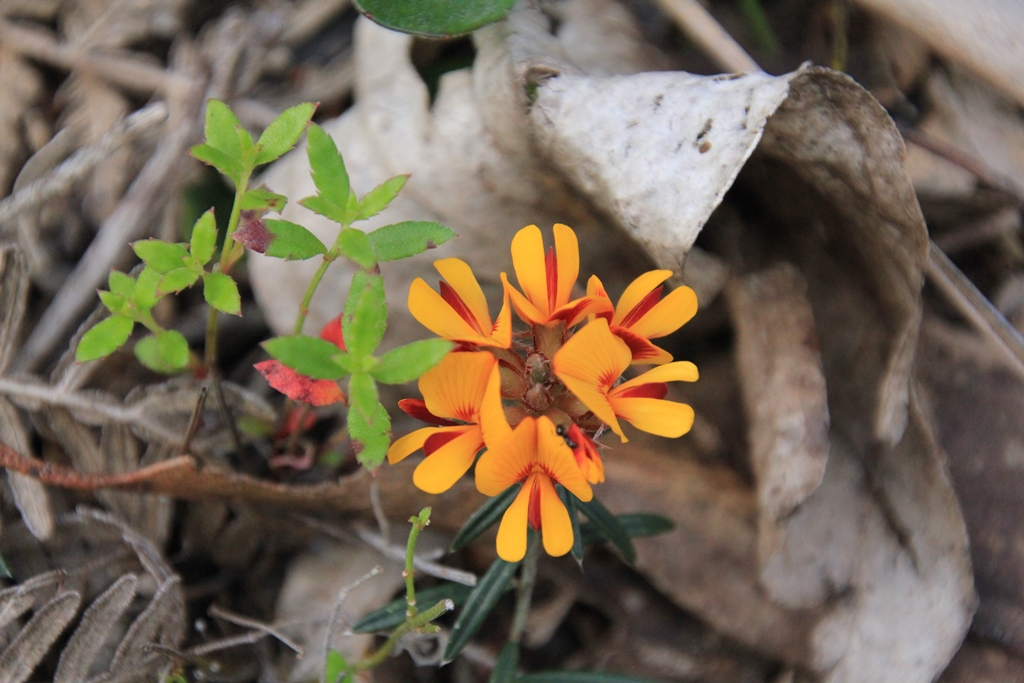October Plant 24