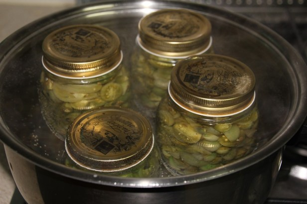 Pickled Green Tomatoes 2