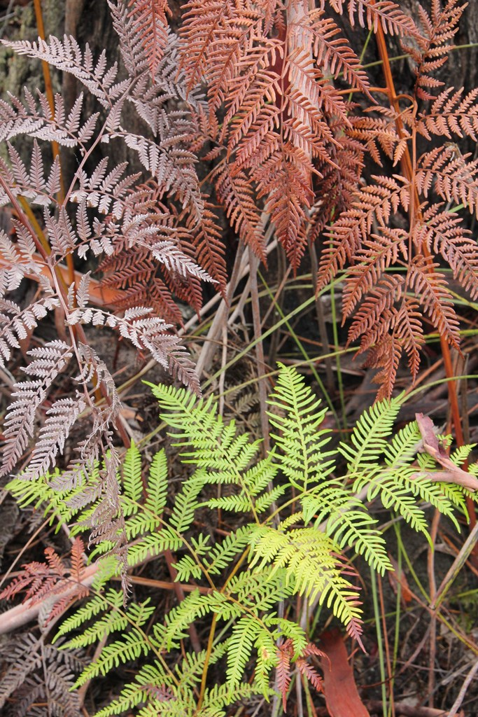 Trio of bracken colour
