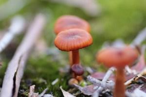 Unidentified Fungi 04