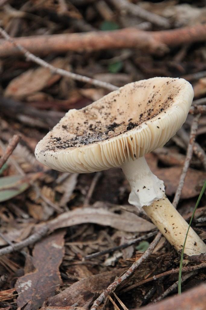 Fungi 04
