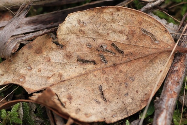 dry-leaf-on-ground-with-insect-marks