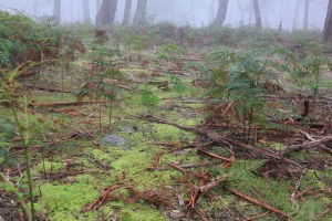 moss-covered-walking-track-through-bushland