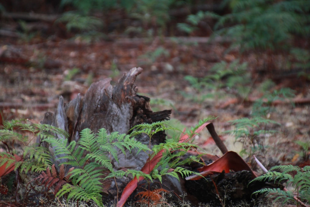 Fallen-Bark-After-Rain-showing-bracken-and-rich-bark-colours