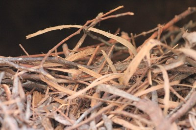 nest-constructed-of-bark-and-twigs