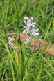 white-small-lily-flowers-against-grass-gackground