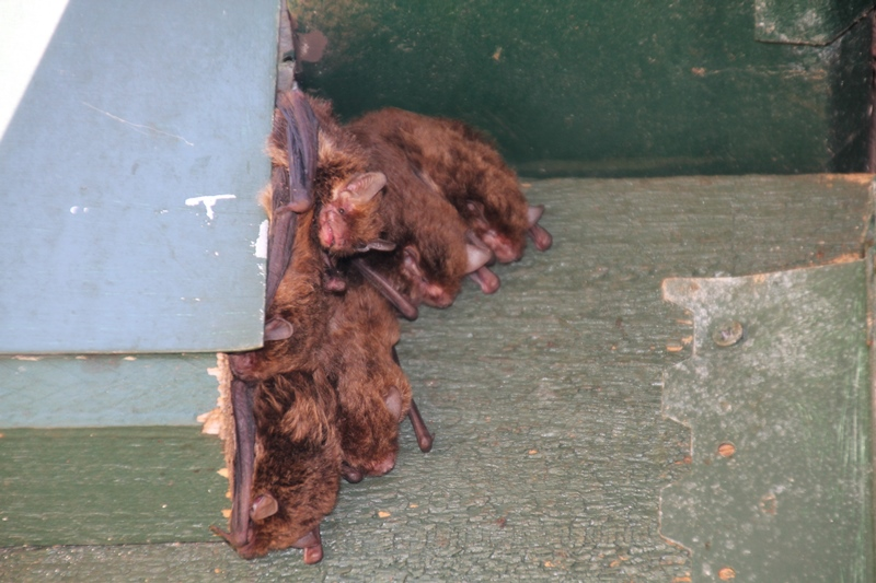 Colony-of-bats-emerge-from-their-chamber-on-a-hot day
