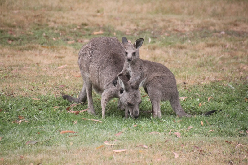 Gallery: Young Joey Practices Wrestling with Mum