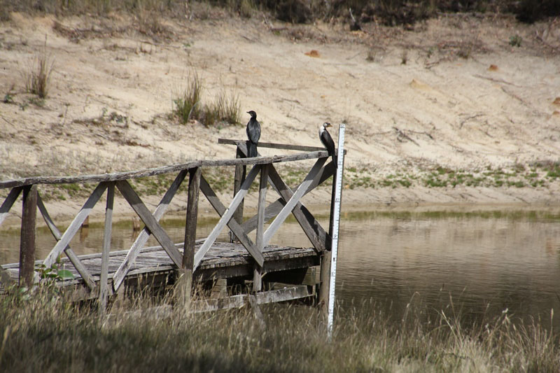Pair-of-little-pied-cormorants-sitting-ona-dam-jetty