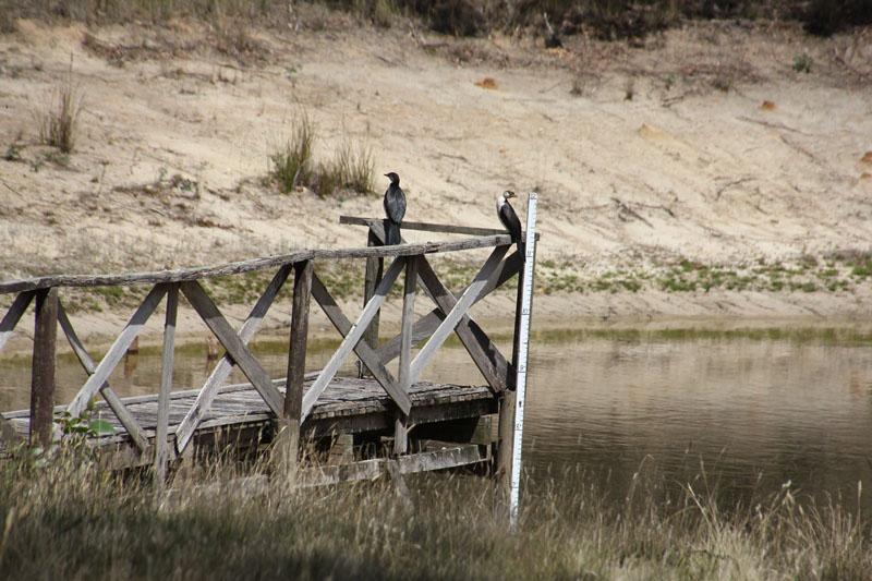 Pair-of-little-pied-cormorants-sitting-ona-dam-jetty