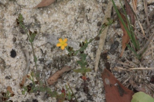 yellow-flower-groing-in-sand-on-dam-bank