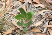 unidentied--young-tree-growing-in-sand